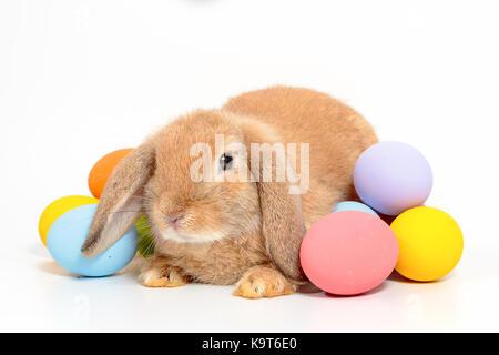 Süße kleine Osterhasen - Stockfoto