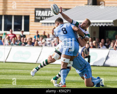 London, Großbritannien. 24. September 2017. Mark helle entlastet in einem Gerät, Ealing trailfinders v London Scottish - Stockfoto
