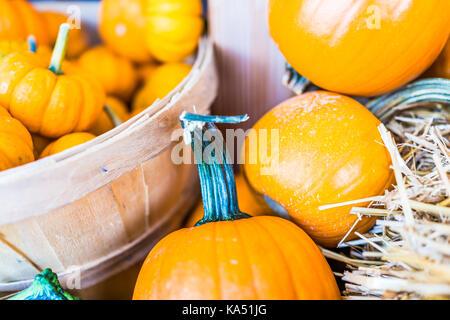 Makro Nahaufnahme von kleinen gelben Dekorative schnitzen Kürbis Kürbis im Warenkorb auf trockenen getrocknete Heu - Stockfoto