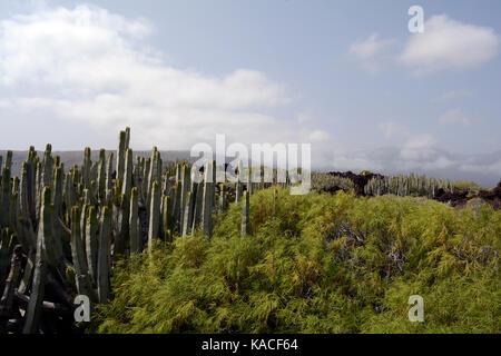 Wilde Landschaft auf Teneriffa, Küsten vulkanische Landschaft - Stockfoto
