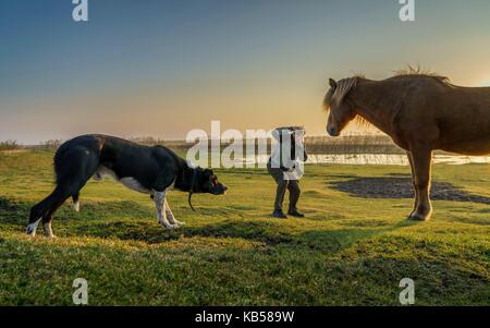 Touristen, die Bilder von einem isländischen Pferd während ein Hund sich nähert, Island. - Stockfoto