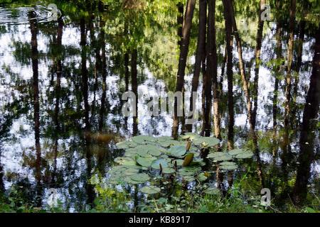 Bäume in einem See spiegelt - Stockfoto