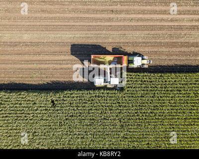 Maschinen Ernten von Mais im Feld. Antenne drone erschossen. - Stockfoto