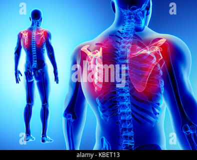 3D-Darstellung von Schulterblatt und Teil des menschlichen Skeletts ...