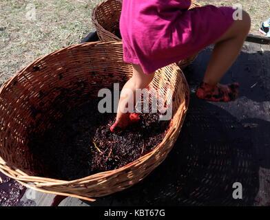 Krim, Russland. 30 Sep, 2017. Ein Kind stomps Trauben am WineFest Weinlese und die Herstellung von Wein Festival - Stockfoto