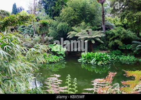 Große leaved exotische Pflanzen von Baumfarne, Gunnera, Bambus und Trachycarpus undulata im Dschungel bei Heligan, - Stockfoto