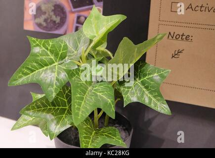efeu pflege ka 1 4 nstliche golden pothos hunters robe oder arum pflanzen in einem topf fa r haus und als zimmerpflanze