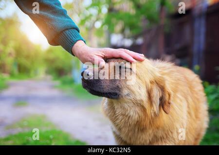 Menschliche Hand streichelt ein Hund. hundezucht Komposition. glücklicher Hund - Stockfoto