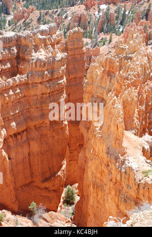 Baum im Felsen im Bryce Canyon, Utah, USA - Stockfoto