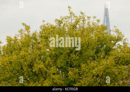 London, Großbritannien. 4. Oktober 2017. Blick von Primrose Hill, London Uk. Credit: Sebastian remme/alamy leben - Stockfoto