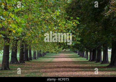 Windsor, Großbritannien. 4. Oktober 2017. Im Herbst Farben neben dem langen Spaziergang im Windsor Great Park. Credit: - Stockfoto