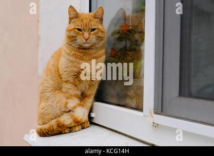 Die hübsche Obdachlose schöne Ginger rot gestreiften Katze sitzt auf der Fensterbank - Stockfoto