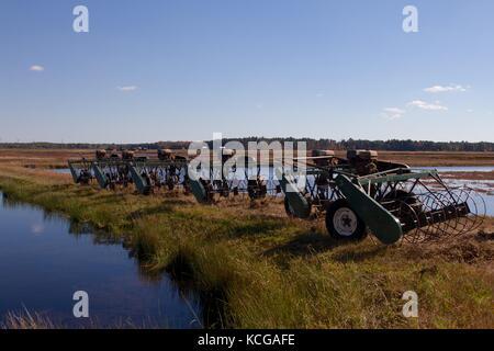 Wasser Haspel Erntemaschinen, oder Quirle, werden verwendet, Cranberries, die die Spitzen der überschwemmten Moor - Stockfoto