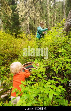 Eine Frau und ihre beiden Kinder abholen Heidelbeeren in Kokanee Glacier Provincial Park, obwohl ihr ältester Junge - Stockfoto