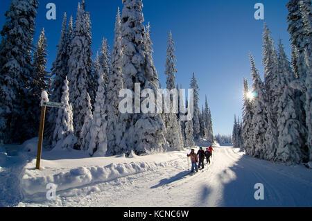 Junge Familie genießt einen Tag Langlaufen am souveränen Seen Nordic Centre in der Nähe von Vernon in der Okanagan - Stockfoto