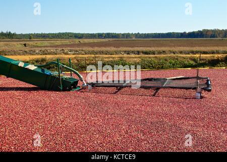 Oktober 21, 2012 - Chatsworth, New Jersey, USA: Ein Förderband ist in einem Cranberry verwendet während der nassen - Stockfoto