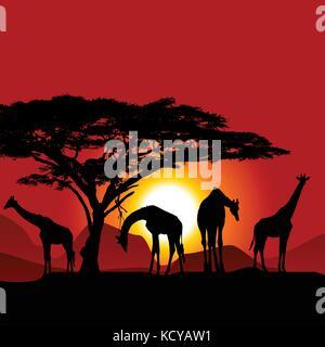 Silhouetten von Giraffen auf afrikanischen Sonnenuntergang - Savanne - Stockfoto