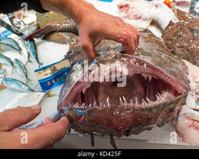 Seeteufel Jaws Zähne Französisch Breton Fischhändler zeigt die ehrfürchtige offenen Backen der scharf gezahnten Seeteufel auf seinem Fisch Markt Bretagne Frankreich Abschaltdruck