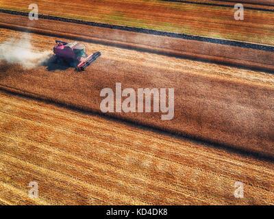 Luftbild des Feldhäckslers Landwirtschaft Maschine erntet goldenen Reif Weizenfeld kombinieren - Stockfoto