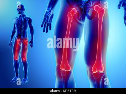 3D Abbildung des Femur - Teil des menschlichen Skeletts Stockfoto ...