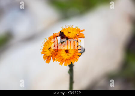 Nahaufnahme von orange Blume - Stockfoto
