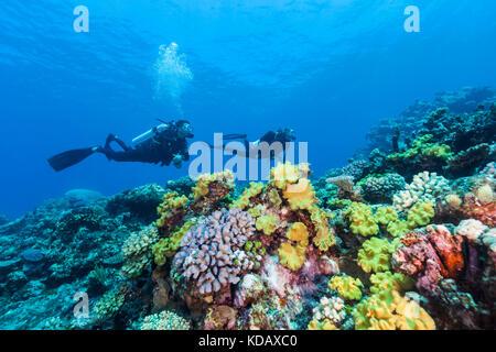 Die korallenformationen Taucher Erkunden von St. Crispin Reef, Great Barrier Reef Marine Park, Port Douglas, Queensland, - Stockfoto