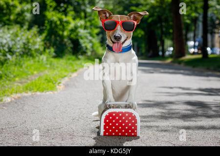 Verloren und Obdachlose Jack Russell Hund auf die Straße verlassen Warten verabschiedet werden, Gepäck oder einer - Stockfoto
