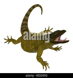 Die chuckwalla ist eine große Eidechse, die vor allem in ariden Regionen der südlichen Vereinigten Staaten und im Norden Mexikos gefunden.