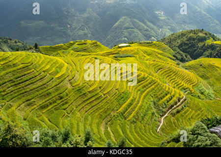 Longji Terraced Rice Fields, longsheng, Guangxi, China - Stockfoto