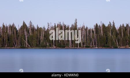Gebleicht Bäume am großen See in der Willamette National Forest, Oregon - Stockfoto