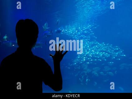 Überrascht Besucher in Osaka Aquarium, eines der größten Aquarien der Welt, Osaka, Japan - Stockfoto