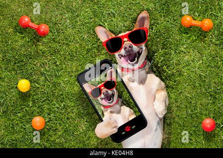 Gerne chihuahua Terrier Hund im Park oder Wiese warten und bis zu Eigentümer zu spielen und gemeinsam Spaß haben, - Stockfoto