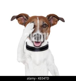 Sehtest Hund