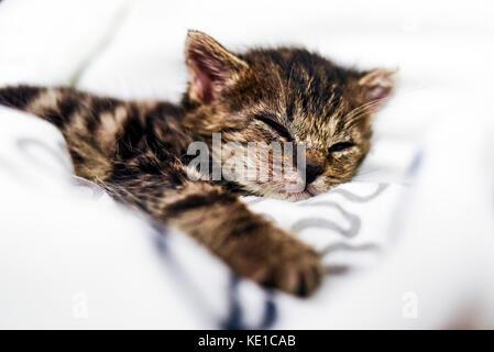schlafende katze stockfoto bild 103533137 alamy. Black Bedroom Furniture Sets. Home Design Ideas