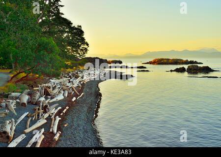 Eine geschwungene Küstenlinie mit Stapel von Treibholz an pipers Lagoon Park bei nanaimo Vancouver Island, British - Stockfoto