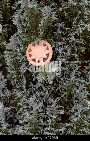 Ein Weihnachten pie st auf den Ästen eines Nadelbaumbaum mince - Stockfoto