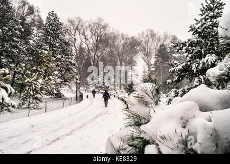 Blizzard Bedingungen In der Arthur Ross Pinetum, Central Park, New York City, New York, Vereinigte Staaten von Amerika - Stockfoto