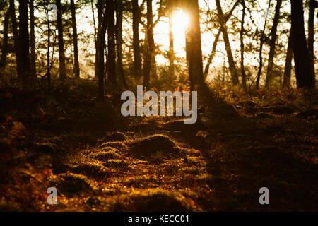 Nebliger Sonnenaufgang im Moor - Stockfoto
