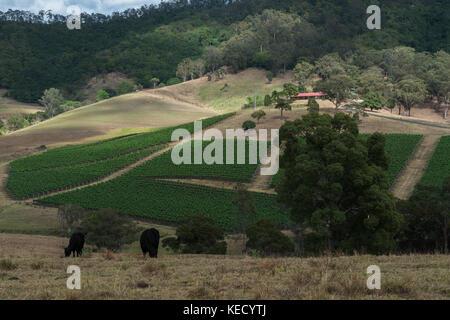 Landschaft 16. Oktober ,2017 Hunter Valley, Australien. Eine Arbeitsgruppe Wein Weinberg zu Beginn einer neuen Saison in New South Wales, Australien