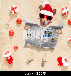 chihuahua hund mit santa claus hund an den strand und das. Black Bedroom Furniture Sets. Home Design Ideas