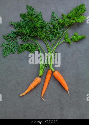 Frische Karotten Bündel auf dunklen konkreten Hintergrund. Rohe frische Karotten mit Schwänzen. frische Bio Karotten mit Blättern. Bündel frische Karotten mit Grün le