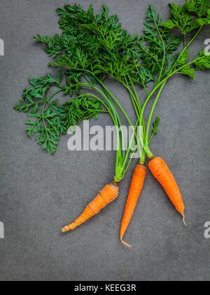 Frische Karotten Bündel auf dunklen konkreten Hintergrund. Rohe frische Karotten mit Schwänzen. frische Bio Karotten - Stockfoto