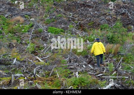 Waldarbeiter zu Fuß unter die Überreste einer Protokollierung in den Monts Valin, Provinz Quebec, Kanada. - Stockfoto