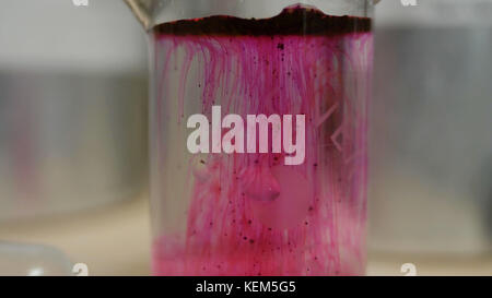 Farbige schöne chemische Reaktion in Kolben. rosa oder rote Flüssigkeit löst sich im Kolben. rosa Materie in die - Stockfoto