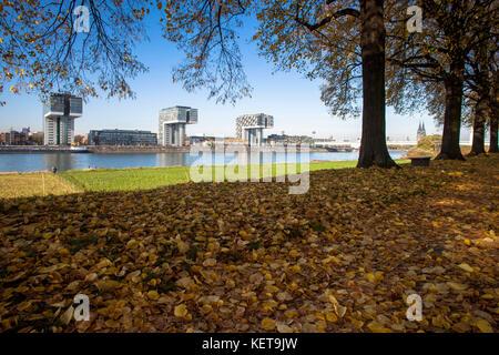 Deutschland, Köln, Bäume im Stadtteil Deutz, Blick auf die kranhäuser am Rheinauer Hafen, auf der rechten Seite - Stockfoto