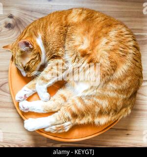 Nach rothaarige Katze auf einem runden Kissen zu Hause liegen. - Stockfoto