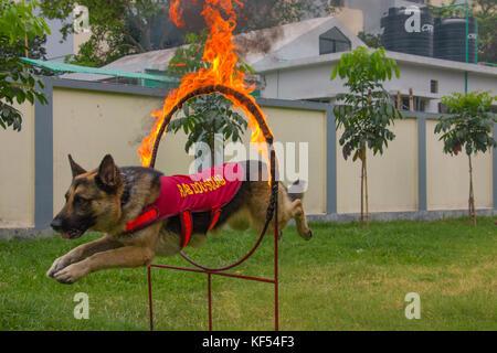Hund Squad ist super Teil für die Verhütung des Terrorismus, Drogenschmuggel, Bombe, Terror gefangen und viele weitere - Stockfoto
