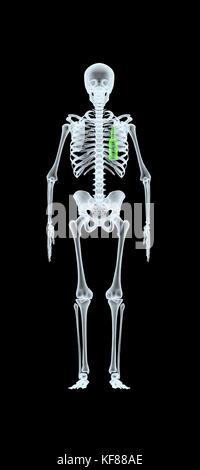 X-ray von einem Mann mit Bier Flasche anstelle von Herz, 3D-Darstellung - Stockfoto