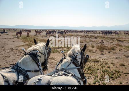Usa, Nevada, Brunnen, Gäste können im Pferd teilnehmen - planwagenfahrten während ihres Aufenthaltes im Mustang - Stockfoto