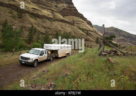 Usa, Oregon, Joseph, Cowboy und rancher Todd Nash seine Pferde treibt bis Big Sheep Creek, wird er sein Vieh Upstream - Stockfoto